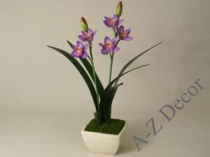 Cymbidium in pot 33x56cm [AZ01849]
